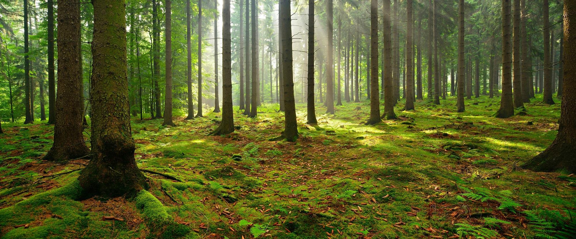 res_duurzaam bos.jpg